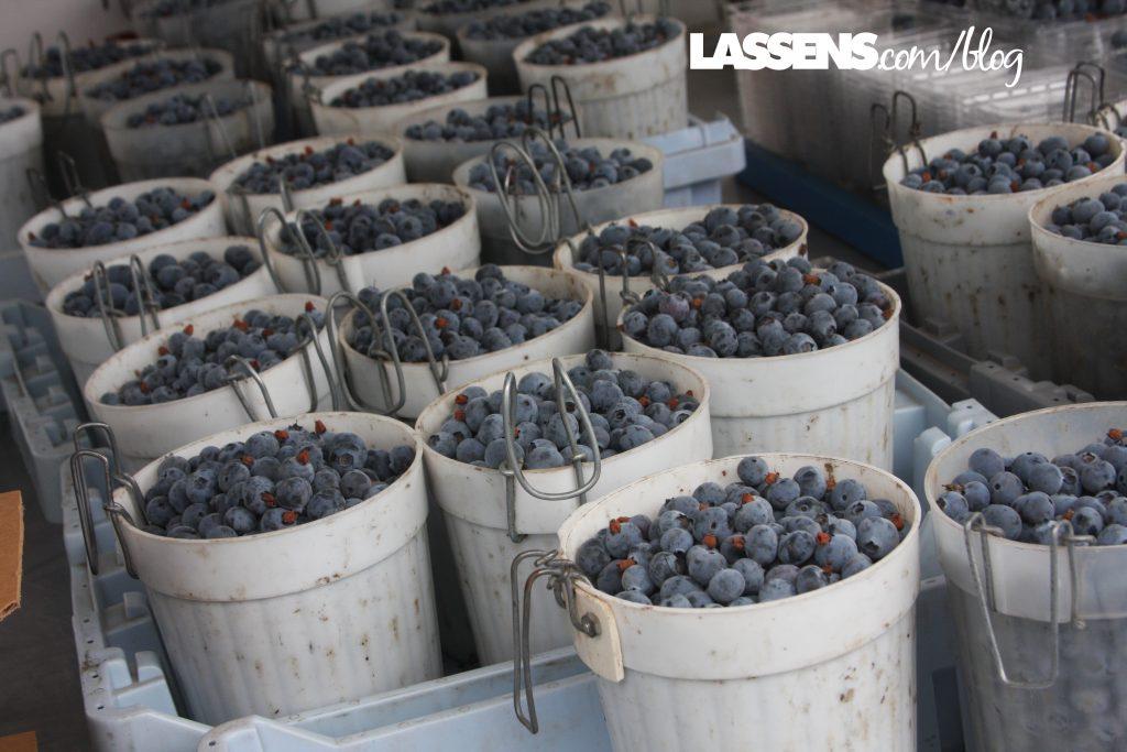 Organic+Blueberries, locally+grown,