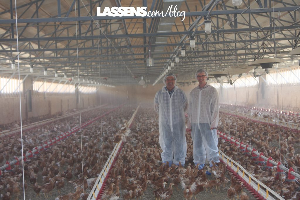 Chino+Valley+Ranchers+Eggs, Organic+Eggs, Healthy+Eggs, Cage+Free+Eggs,