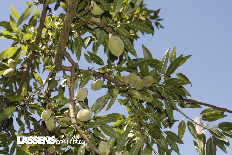 bulk+almonds, organic+almonds, almond+butter, organic+almond+butter, yemetz+family+farms, organically+grown+almonds